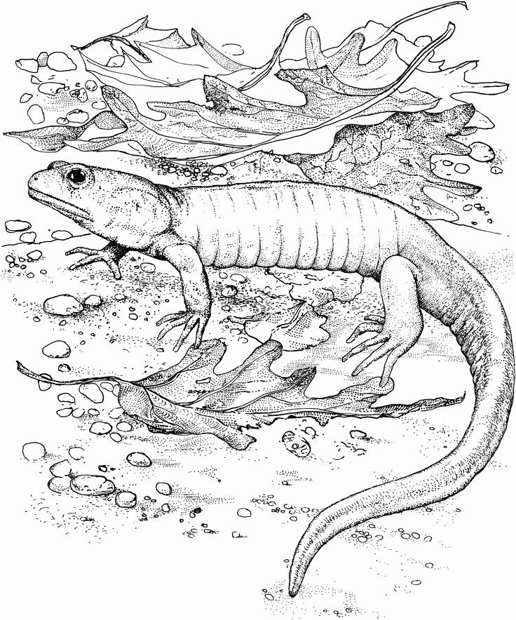 Bearded Dragon Coloring Page Beautiful Lizard Coloring Pages Bearded Dragon Coloringstar Dragon Coloring Page Chibi Coloring Pages Coloring Pages For Kids