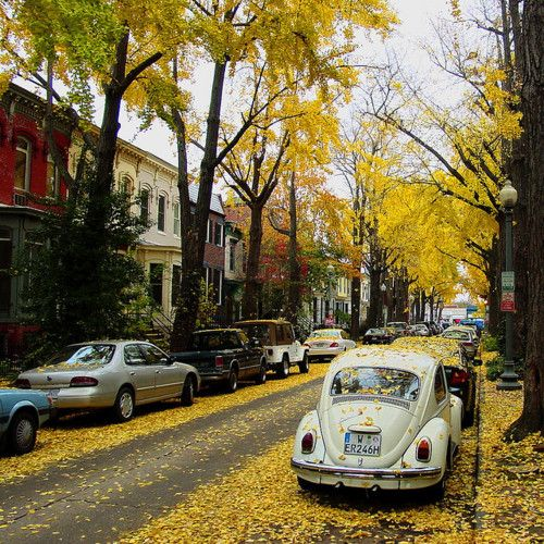 DCPunch Buggy, Remember This, Bugs, Autumn, Oldcars, Roads Trips, Leaves, Old Cars, Beetles