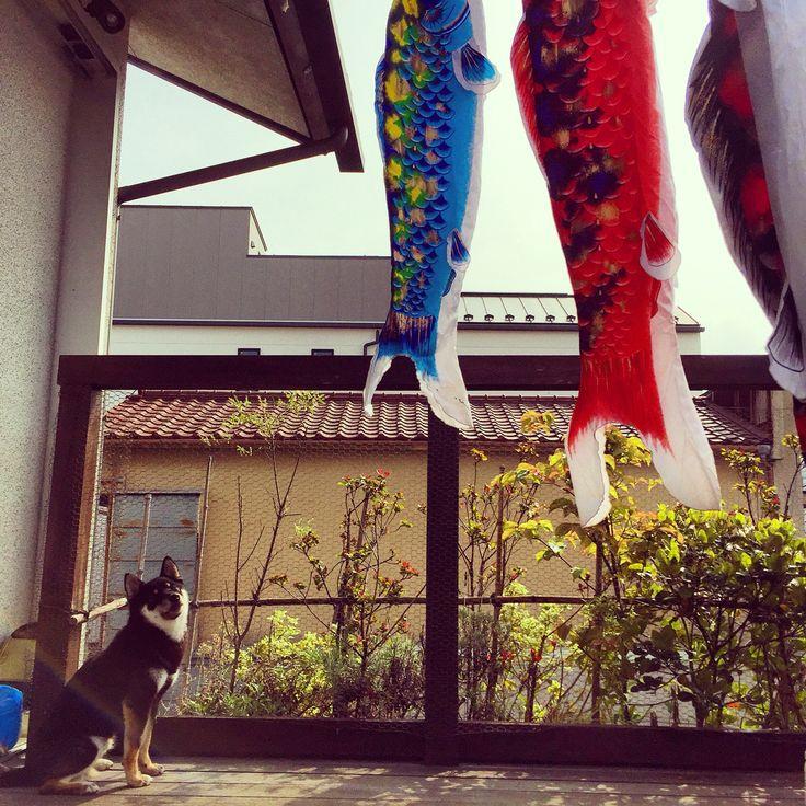 chidren's day #mar #chidrensday #japan