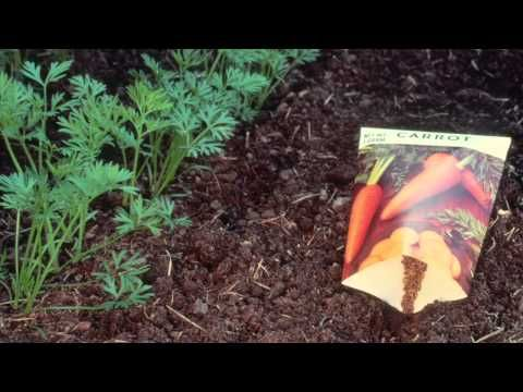 Garden Ideas Videos 221 best vegetable garden ideas images on pinterest | garden ideas