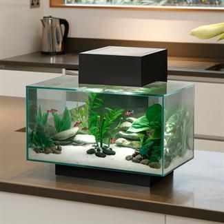 The Fluval Edge fish tank has a unique and elegant design that is sure to turn heads. This all glass aquarium provides a unique look with a contemporary setting. The partially sealed top reduces evaporation for less maintenance & a large, hidden aperture allows oxygen exchange to keep fish healthy. The light fixture creates a bright, directional light source for a beautiful 'shimmer' effect across your entire aquatic scene. www.PetSolutions.com