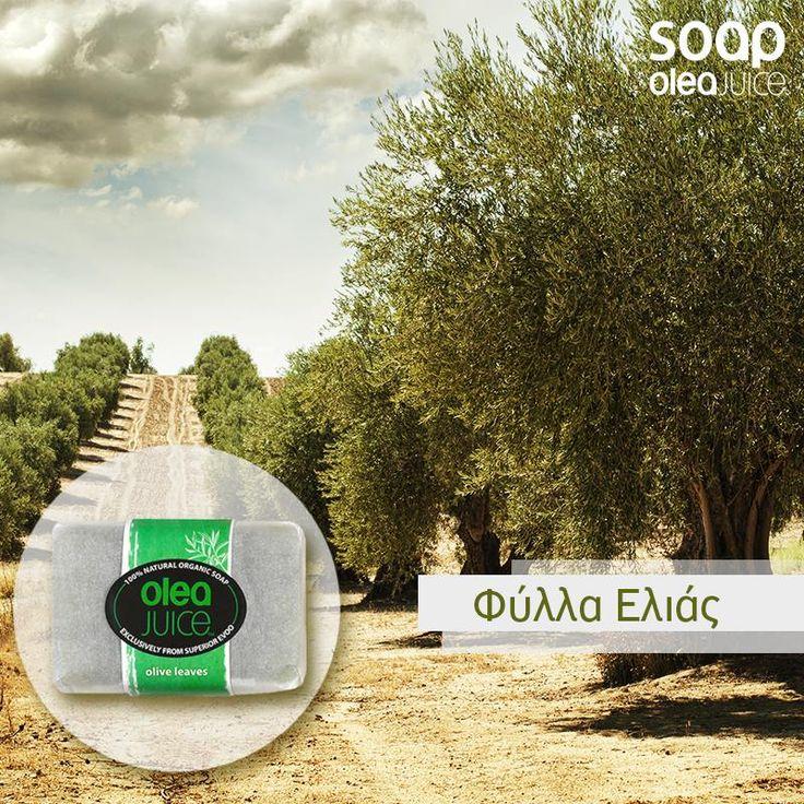Olea juice soap με φύλλα ελιάς η επιλογή μας για σήμερα. Η δική σου; #olea #juice #soap #olive #oil #olivetrees