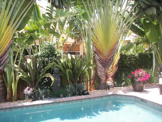 Tropical palms around pool nice shade for Tropical pool landscaping plants