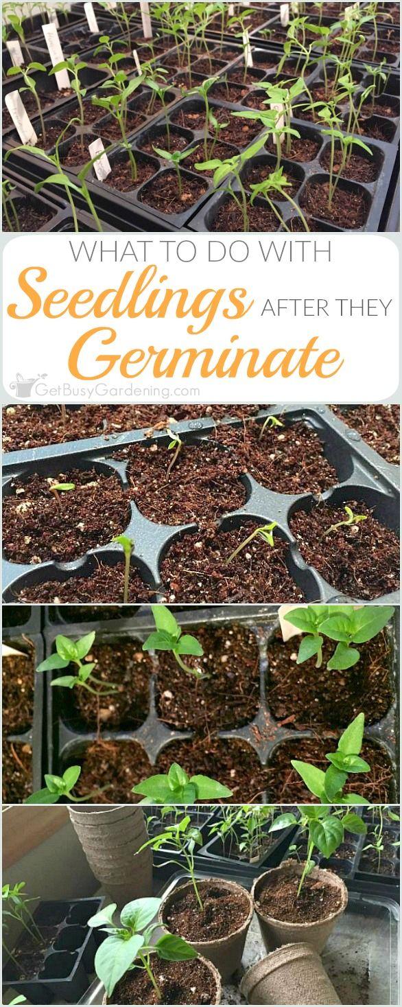 2209 best Gardening | Tips & Ideas images on Pinterest | Gardening ...