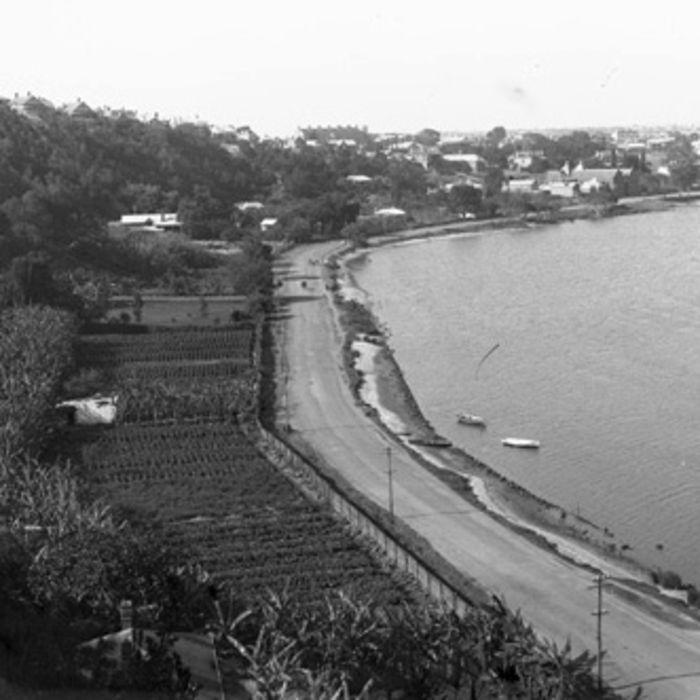 Market Gardens, Mounts Bay Rd c1905