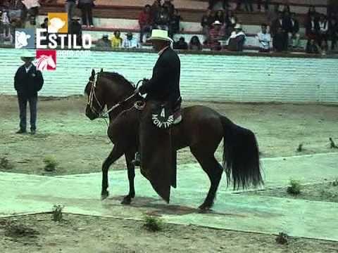 Colombian Paso Fino performing. Gran Campeonato de Caballos Paso Fino Colombiano - Sogamoso 2013