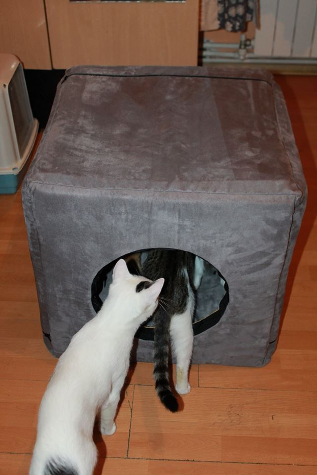 3 in 1 box, designed specifically for cats or small/medium size dogs, it turns in bed or armchair. It's a cube with sides of 55 cm, made of 3 cm thick sponge, the cover is removable due to the zippers and washable at 30 °C.The cushion is stuffed with siliconised puff.