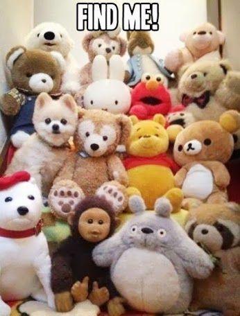 So Cute Cute And Cuddly Funny Animal Memes Cute