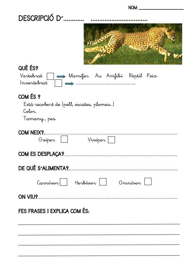 Fitxes llibre animals