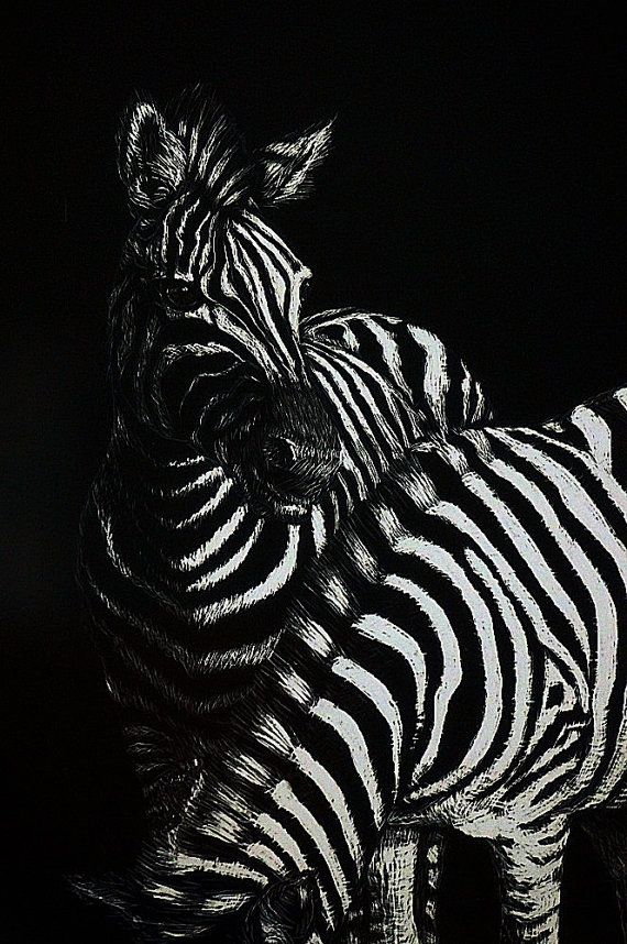 Zebra scratch art scratch art and colored pencil zebras black and white art mixed media art