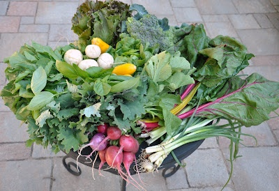 Second wk of CSA food baskets with Roots and Shoots Farm