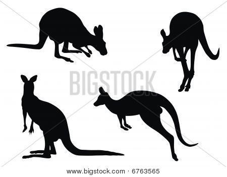 australian animal art - Google Search