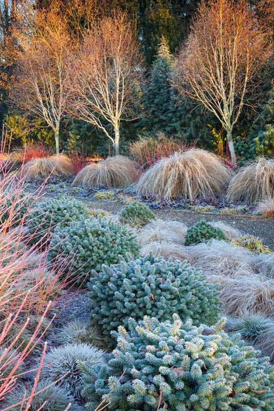 1000 images about gardening on pinterest raised beds for Garden design winter 2018