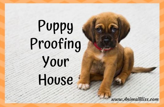 Puppy Proofing Your House Before Bringing Home A New Puppy New