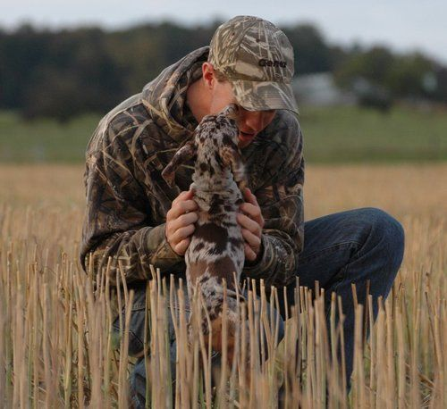 Camo, cute dog and a field. Only a gun could make this picture better