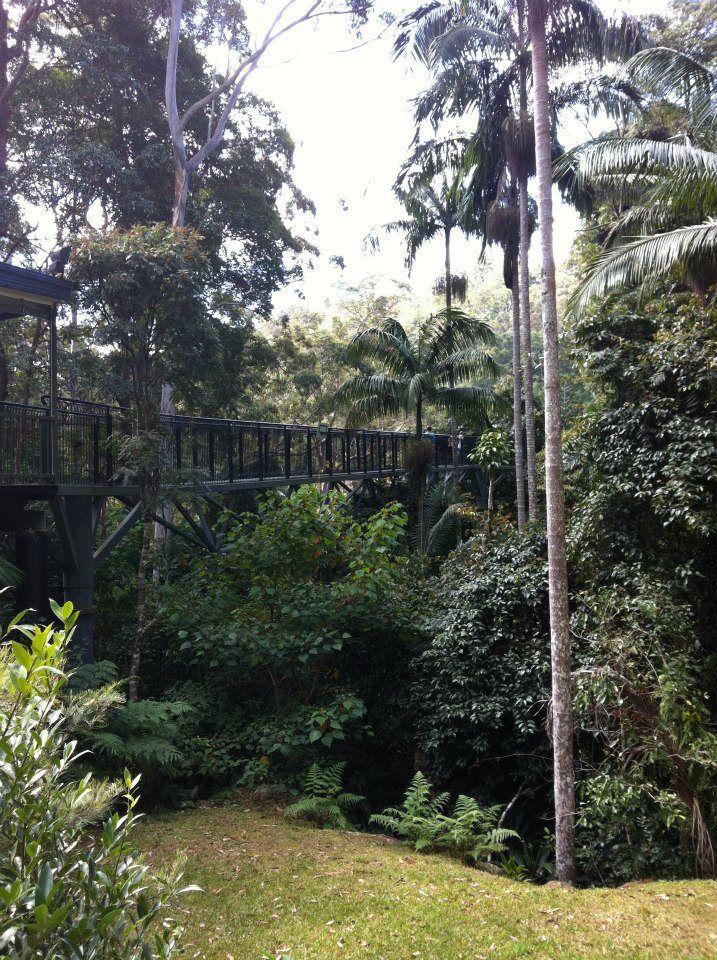 The Rainforest Skywalk, Gold Coast, Australia