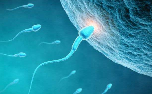 Ανδρική γονιμότητα, γενικά μέτρα και εναλλακτική ιατρική