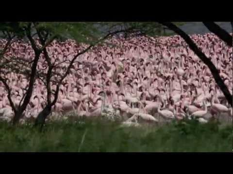 Flamingos at Lake Bogoria, Kenya with WOW & Rhino Watch