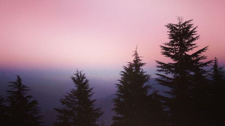(OC)Dusky Silhouettes at Laal Tibba, Mussoorie[4608×2592]