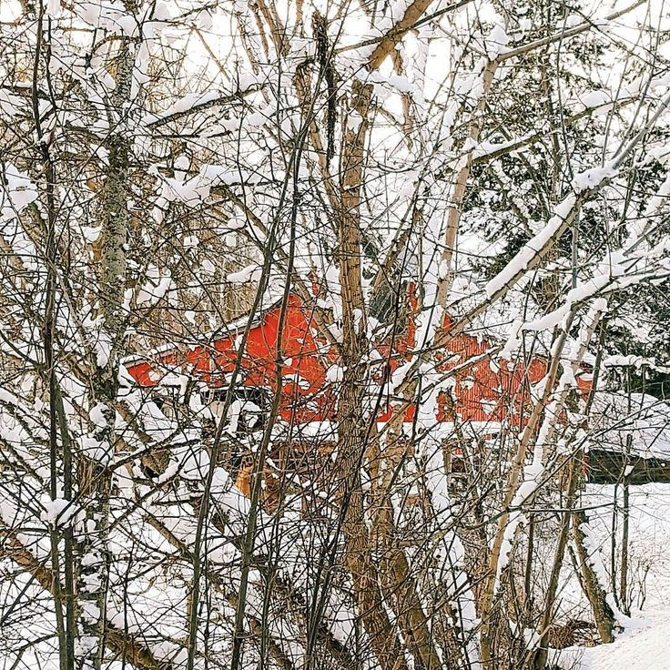 My favorite red barn never ceases to warm me up on a cold day. . . . . .