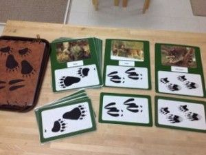 Zoology:  Animal Tracks- Montessori