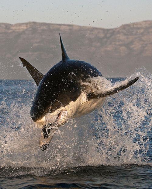 cazando www.flowcheck.es Taller de equipos de buceo #buceo #scuba #dive