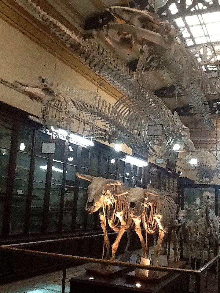 Museo de Ciencias Naturales de La Plata - Sección de Anatomía Comparada.