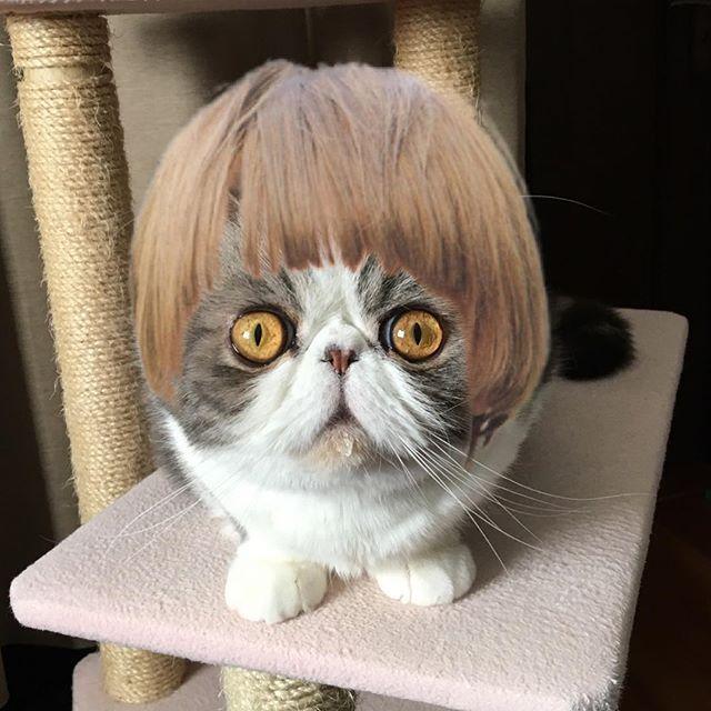 exotic.toshi 時代〜おくれの〜♬男になりたい〜♬🎤 #ムスカ#cats#cat#pets #pet #cute #catiloverclub #猫 #エキゾチックショートヘア#twitterweek#exoticshorthair#cat_features#instacat#catsgram#catsofinstagram#kitten#meow#catlover#catsagram#catlovers#cat_features#catlife#catlove#catsgram#cutecat#cutecats#Instagramjapan#topcatphoto#kittylove#mycat#instacats#instacat#ふわもこ部  2017/04/03 22:04:49