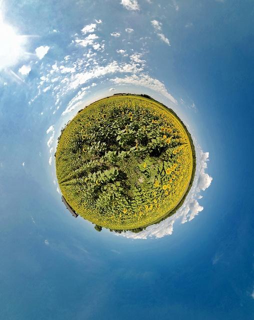 Passion Lavande Planète tournesol 1 by Mario Groleau, via Flickr