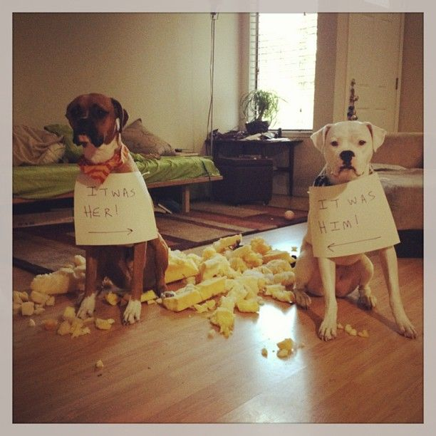 Funny Couches 9 best chewed up couch images on pinterest | google search, funny