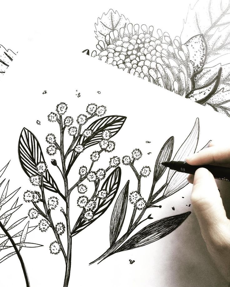 #TBT to some beautiful Australian Native illustrations 🌿 #sadiestreet #illustration #floral #floralinspo #Stationery