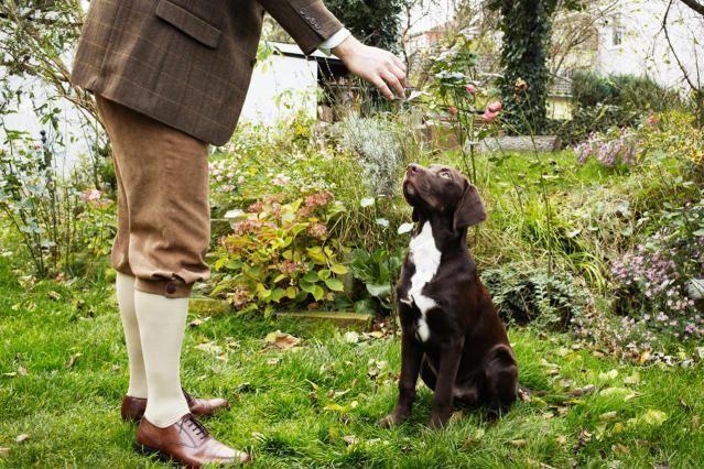 Do It Yourself Dog Training Program Dog Obedience Training Dog