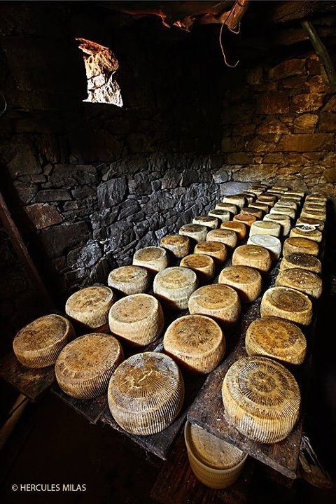 ~✿ڿڰۣ  Graviera Cheese is one of the most popular cheeses in Crete. It is a hard cheese wtih a light yellow color, and has a slightly sweet and nutty taste. The Cretan version (there is also a graviera made in Naxos) is made with sheep milk, or sheep milk with a small amount of goat milk. It is aged at least 5 months before coming to market