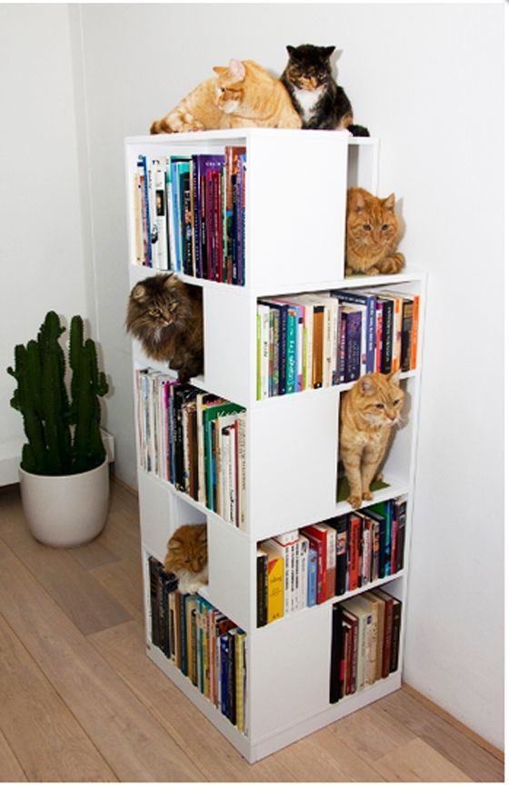 I need an end table.  I need a place for art books.  I need another (really, do I?) place for my cat.....  CatCase is one of Urban CatDesign's modern furniture pieces for cat owners