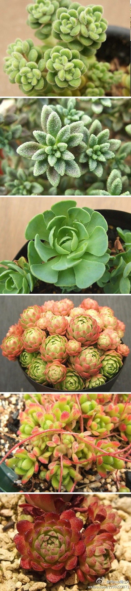 best succulent splendor images on pinterest house plants