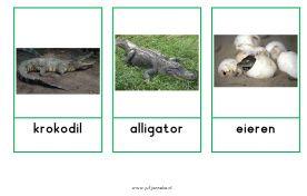 Woordkaarten krokodillen