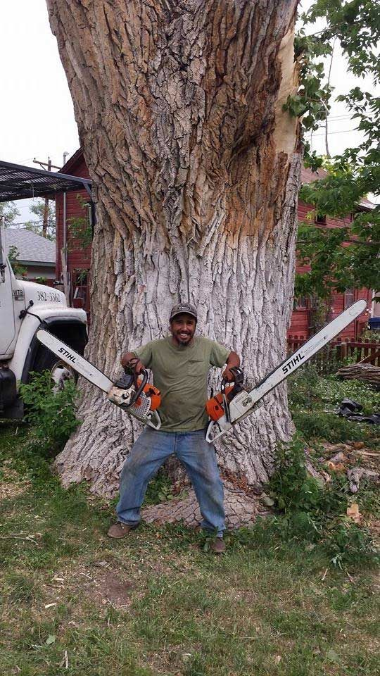 That's a huge tree to cut down- I guess you would need 2 chainsaws!