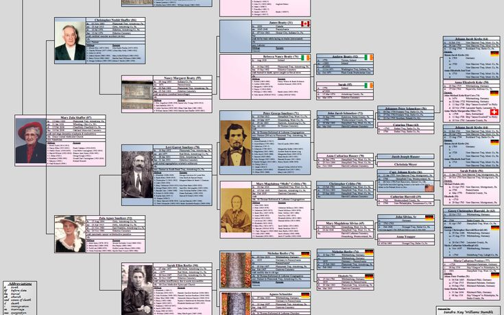 Step Family Tree Openoffice Template Family Tree Pinterest