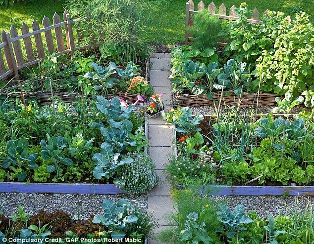 17 best ideas about in season produce on pinterest for Domestic garden ideas