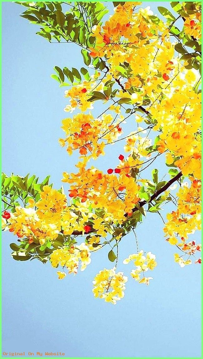 Wallpaper Backgrounds Aesthetic Yellow Space Iphone Wallpaper 640 1136 Yellow Iphone Wallpa Wallpap In 2020 Iphone Wallpaper Yellow Nature Wallpaper Spring Wallpaper