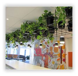Office Plants Supplier  North Sydney  3