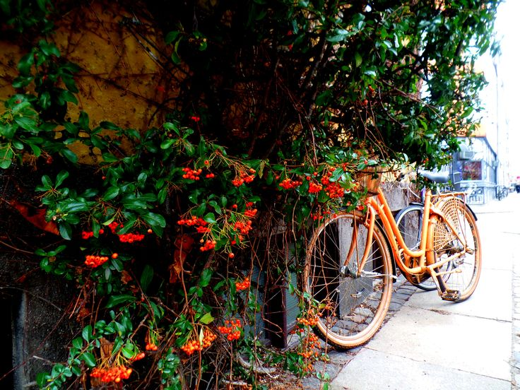 parked bike - Copenhagen (Denmark)