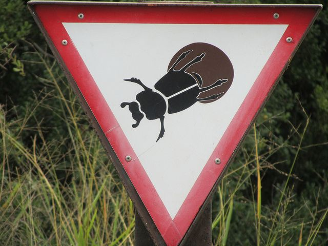 Dung Beetle crossing sign by Arthur Chapman, via Flickr: Beetle Crossing, Insect Oddities, Dung Beetles, Bug Shots, Insect Inspired Art