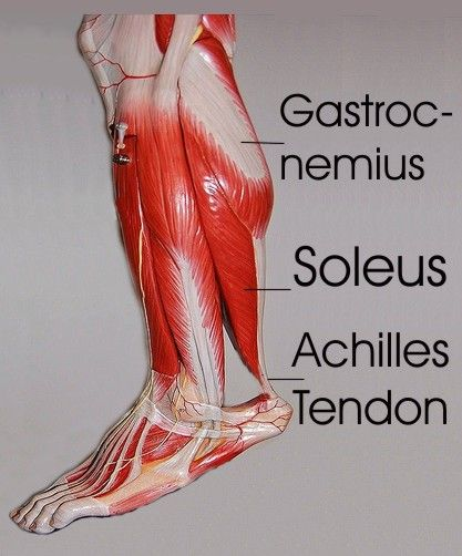 Tight calves - explanation and stretching exercises.