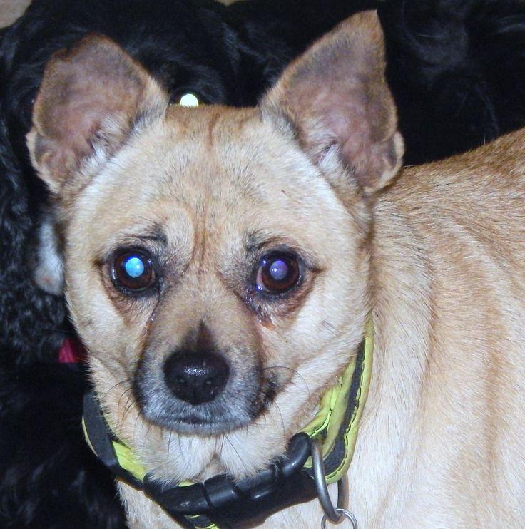 Pug dog for Adoption in Anderson, SC. ADN-386610 on PuppyFinder.com Gender: Female. Age: Adult