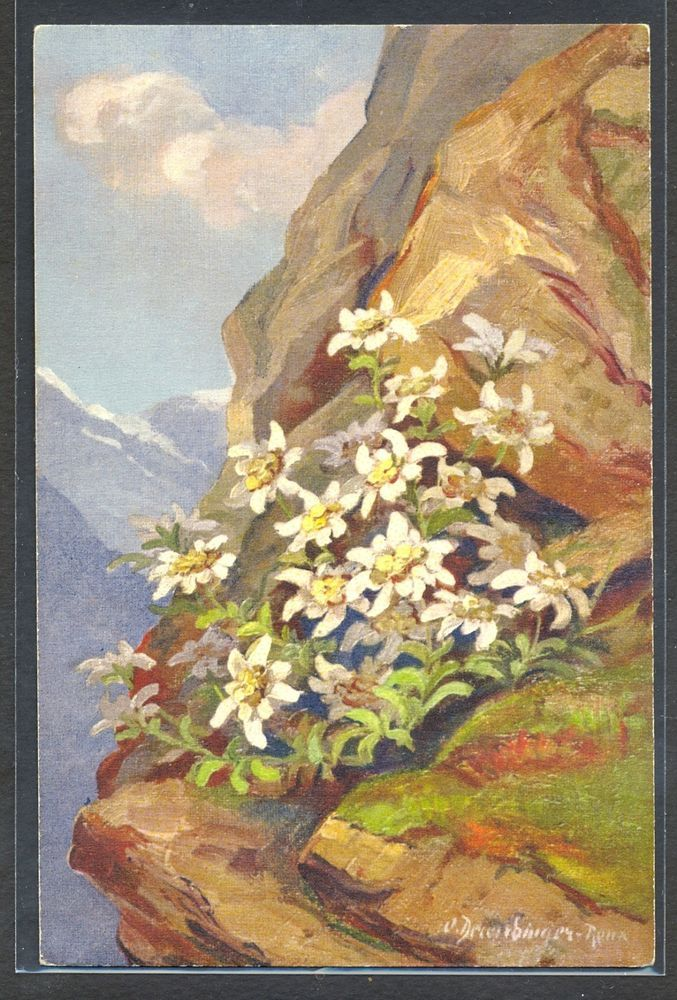 PA072 a/s DERENDINGER MOUNTAINS FLOWERS EDELWEISS  Fine LITHO