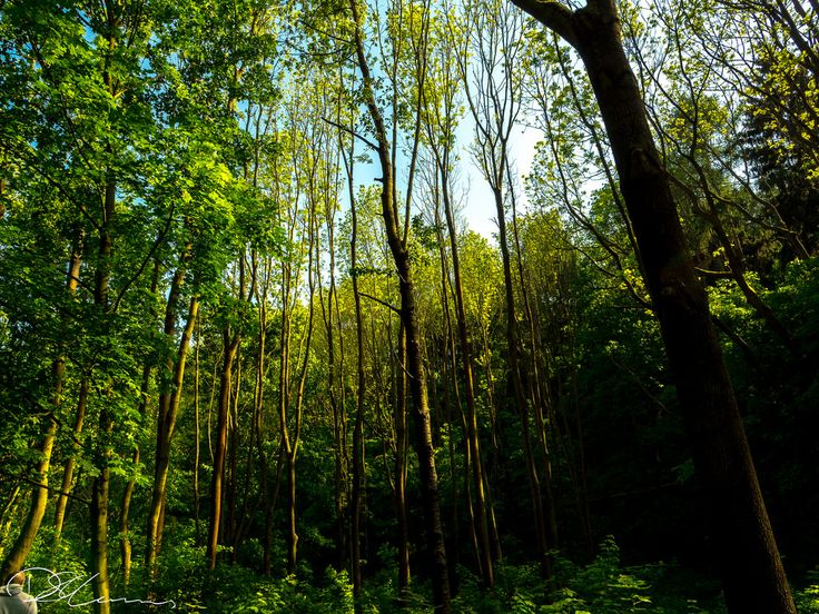 Dvoka Sarka Trees | by Munns Foto