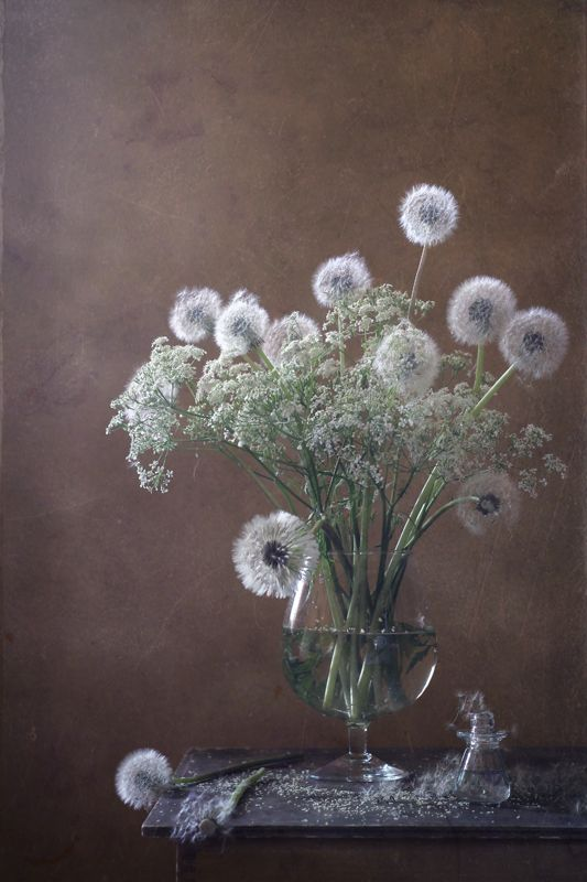 photo: Одуванчики(3) | photographer: Диана | WWW.PHOTODOM.COM