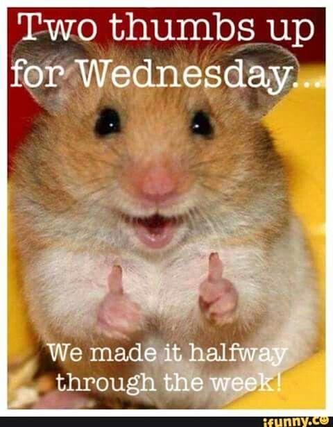 Happy Wednesday!