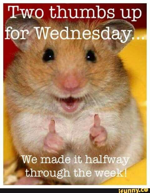 Happy Wednesday!